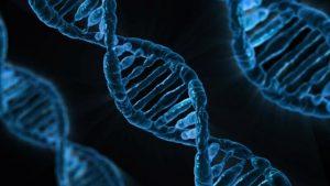 De forward primer van een PCR test